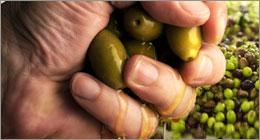 Huile d'olive - Des fraudes plus que juteuses
